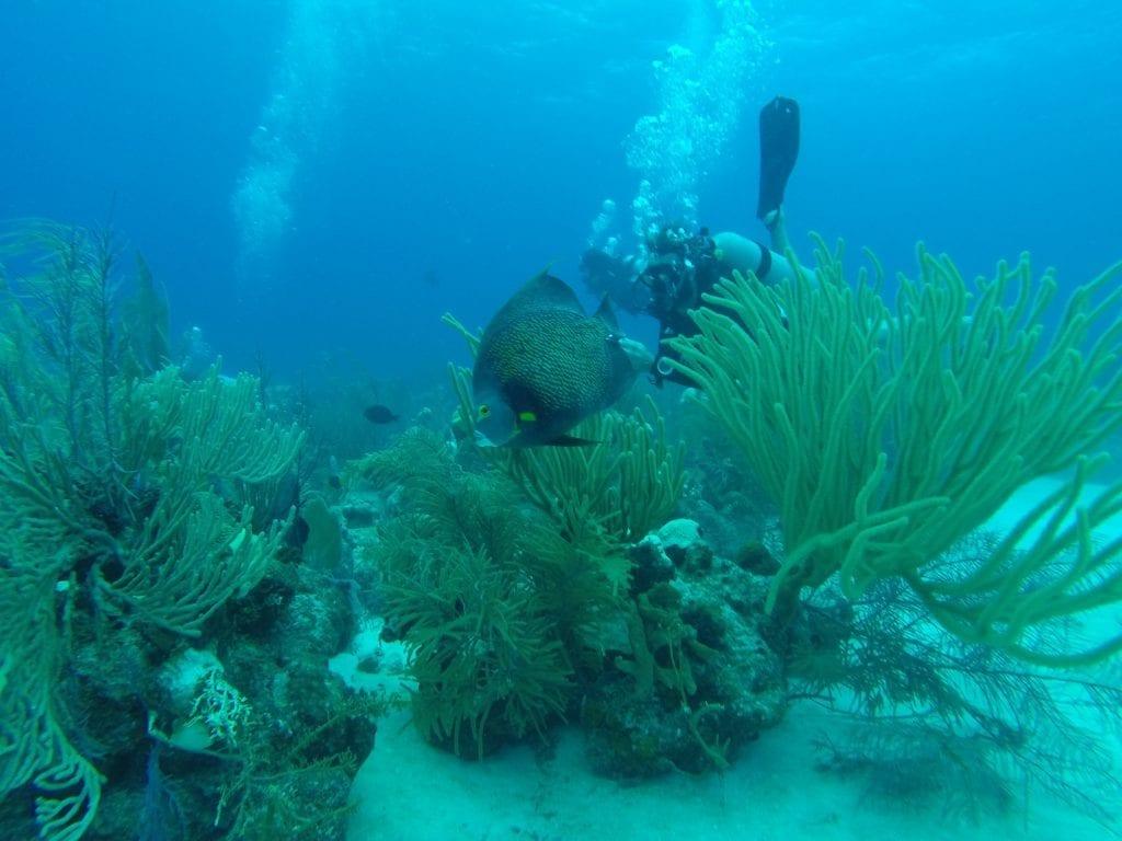 scuba Diver looking at angle fish