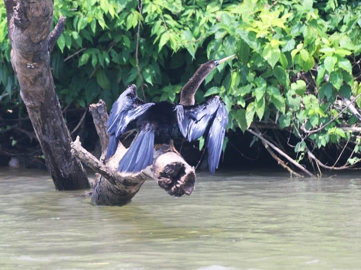 bird at riverside