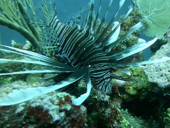 lionfishing on reef