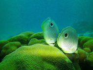 fish swimming coral