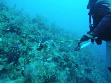 spearfishing in belize