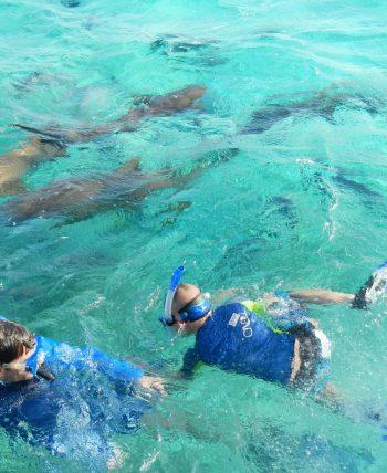 kids snorkeling in placencia village